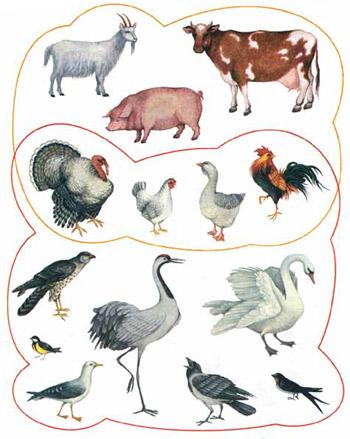 Яку спільну ознаку мають тварини